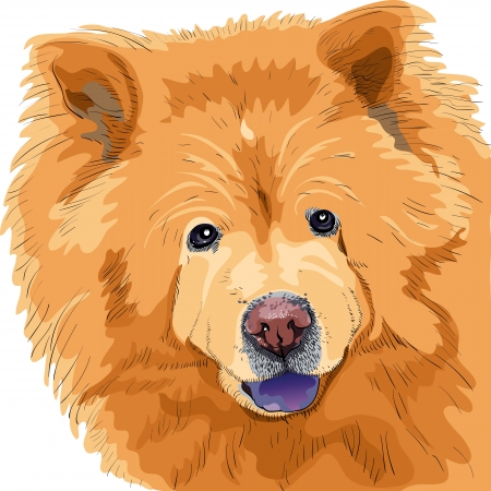 long tongue: color sketch close-up portrait of a dog chow-chow breed isolated on the white background Illustration