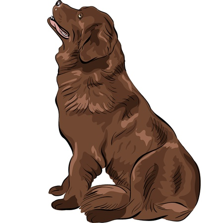 color sketch of the dog Newfoundland hound breed sitting