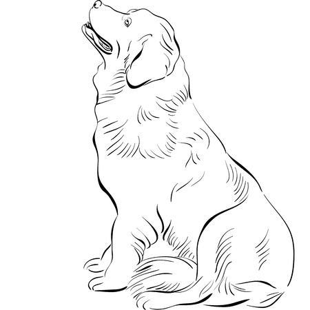 Newfoundland: black and white sketch of the dog Newfoundland hound breed sitting