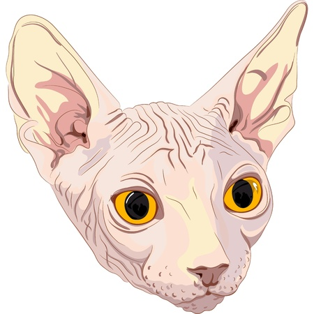 cat eye: Close-up portrait, sketch a cat breed Sphynx with bright yellow eyes isolated on a white background. The Sphynx is a rare breed of cat known for its lack of a coat.