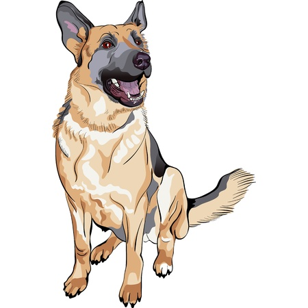 portrait of a dog German shepherd breed sitting and smile Vector