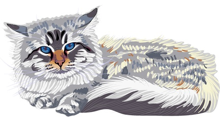 siberian: Close-up portrait, sketch a cat breed Siberian cat color-point (Neva Masquerade) with bright blue eyes.