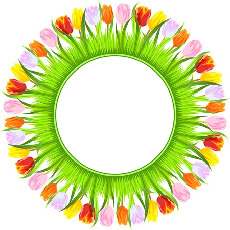 round frame of colorful spring tulips in a light grass  red, yellow, pink, orange, white tulips, isolated on white background Vector