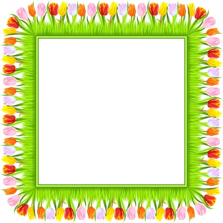 square frame of colorful spring tulips  red, yellow, pink, orange, white, in a light green grass, isolated on white background