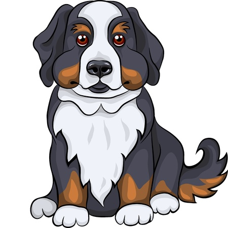attentive: color sketch of a close-up dog breed Bernese Mountain Dog puppy sitting Illustration