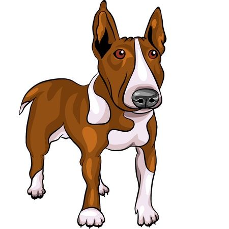 color sketch of a Bull Terrier Dog isolated on the white background Vector
