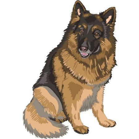 座っている犬ジャーマン ・ シェパード犬と笑顔の肖像画