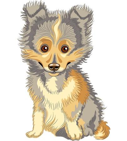 かわいい子犬の品種のシェットランド ・ シープドッグ シェルティー、白い背景で隔離のカラー スケッチ