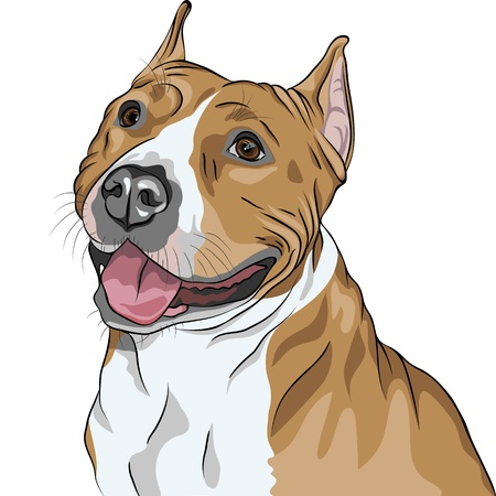 terriers: sketch, closeup portrait of the dog American Staffordshire Terrier breed smiles