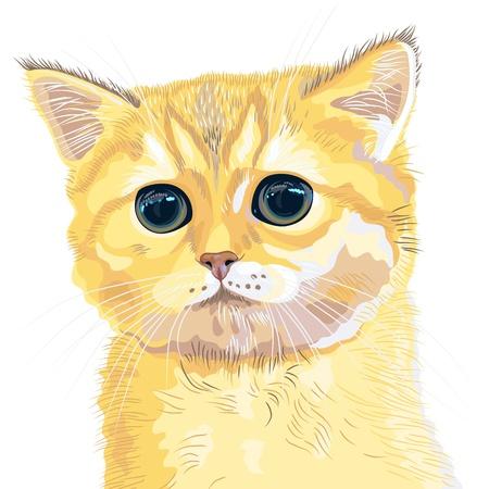 closeup ritratto della cute birichino rossa britannica bel gattino con enormi occhi enormi