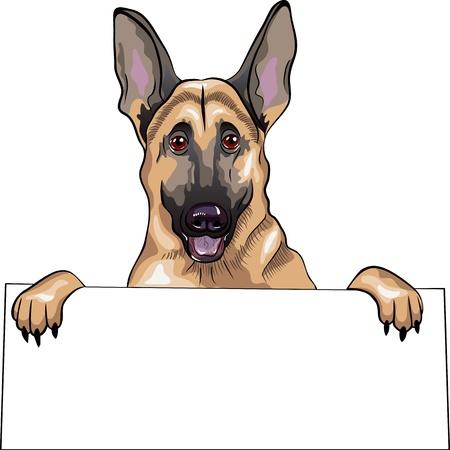pastor de ovejas: close-up retrato de un perro de raza pastor alemán sonríe y sostiene un cartel