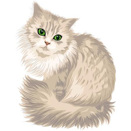 ojo de gato: lindo gato lila con ojos verdes, aislado en el fondo blanco