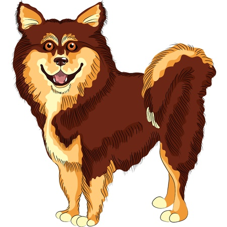 long tail: sketch dog lapphund  breed smiling