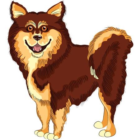 sketch dog lapphund  breed smiling