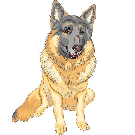 color sketch portrait of a dog German shepherd breed sitting and smile Illustration