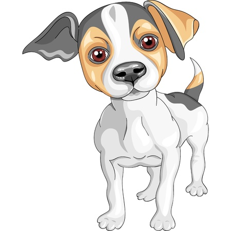 pedigreed: color sketch of the dog Jack Russell Terrier breed