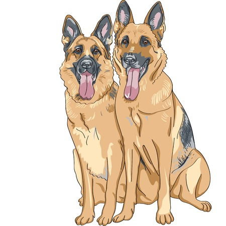 portrait of a two dog German shepherd breed sitting and smile with his tongue hanging out Illustration