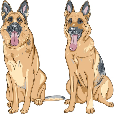 portrait of a dog German shepherd breed sitting and smile with his tongue hanging out Vector