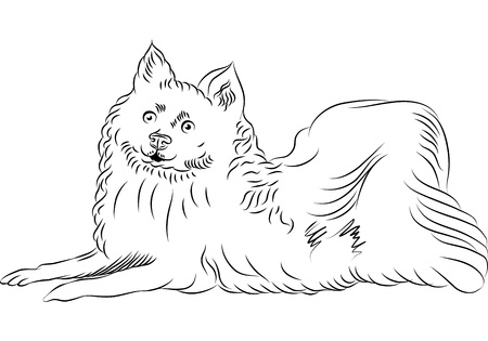 spitz: black and white sketch of the American Eskimo Dog breed lying Illustration