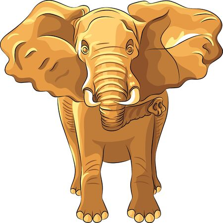 huge African elephant isolated on white background Stock Vector - 14206651