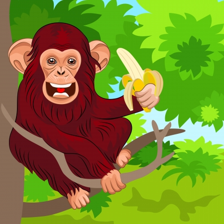 Chimp: red chimpanzee sitting on the branches of a tree in the jungle with banana