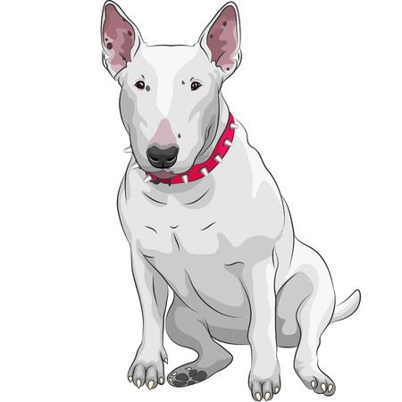 terriers: color sketch of a white Bull Terrier Dog sitting isolated on the white background