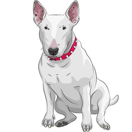 kleur schets van een witte Bull Terrier Hond zitten geïsoleerd op de witte achtergrond Vector Illustratie