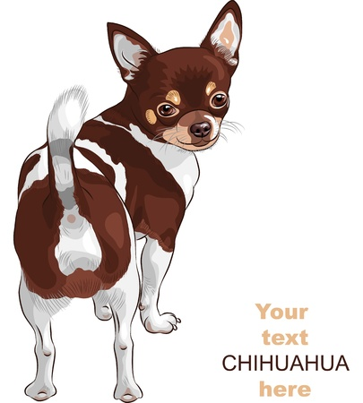 color sketch of the dog Chihuahua breed stands back and looks over his shoulder, smiling