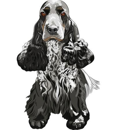 close-up portrait of a gun dog breed English Cocker Spaniel sitting Illustration