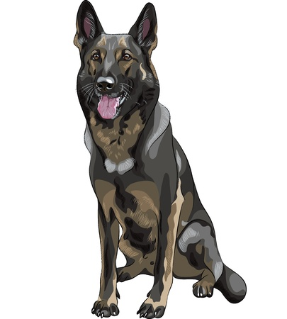 short haired: portrait of a black dog German shepherd breed sitting and smile Illustration