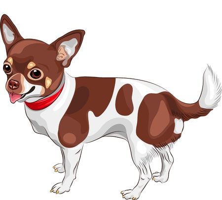 color sketch of the cute dog Chihuahua breed smiling Vector
