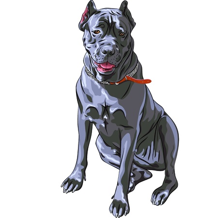 hunter:  sketch of the dog black Cane Corso breed, large Italian Molosser,  sitting Illustration