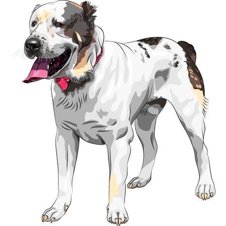 dog ears: sketch of the Central Asian Shepherd Dog (Sredneaziatskaya Ovtcharka) breed