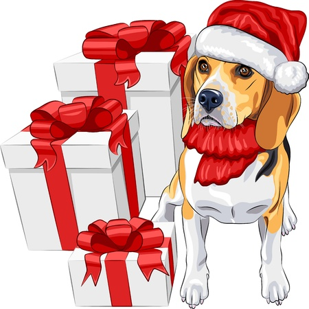 color sketch of the dog Beagle breed  in the red hat of Santa Claus with Christmas gifts Vector