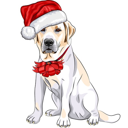 color sketch of the puppy dog Labrador Retriever breed  in the red hat of Santa Claus with Christmas bow Vector