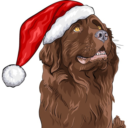 closeup portrait of a dog German shepherd in a Christmas hat of Santa Claus Vector