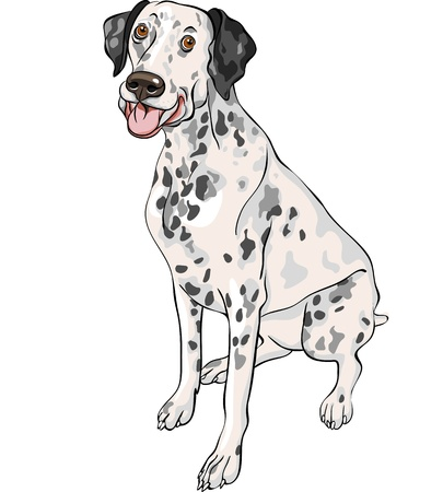 dalmatian: sketch of the cheerful spotted smiling dog Dalmatian breed