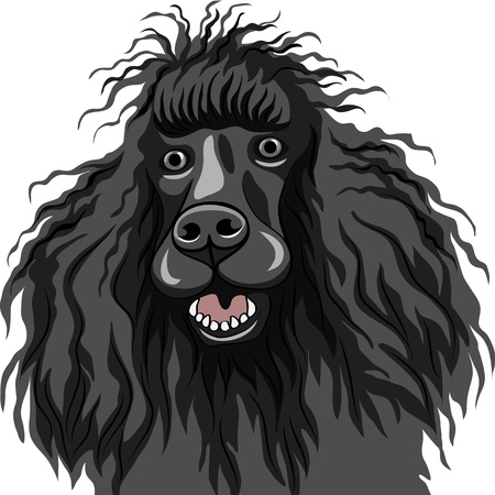 shaggy dog: color sketch of the black dog Poodle breed smiles, isolated on the white background