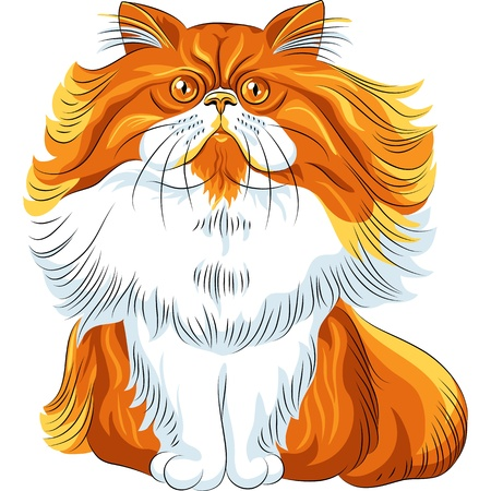 color sketch cute red fluffy Persian cat sitting Vector
