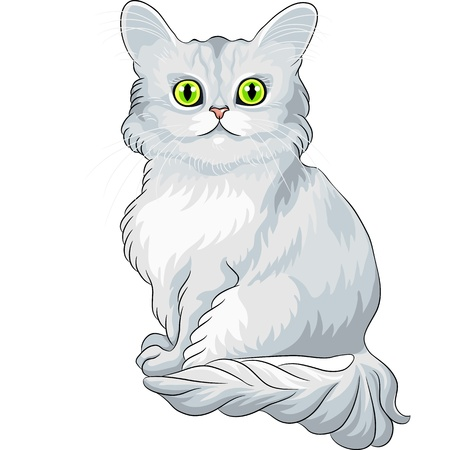 green eyes: fluffy blue Asian Semi-Longhair cat (Tiffany) with green eyes sitting Illustration