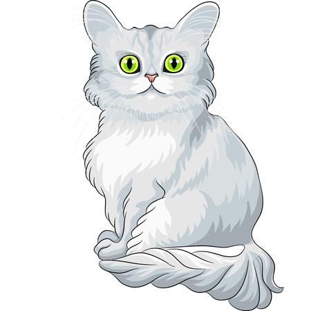 tiffany blue: fluffy blue Asian Semi-Longhair cat (Tiffany) with green eyes sitting Illustration