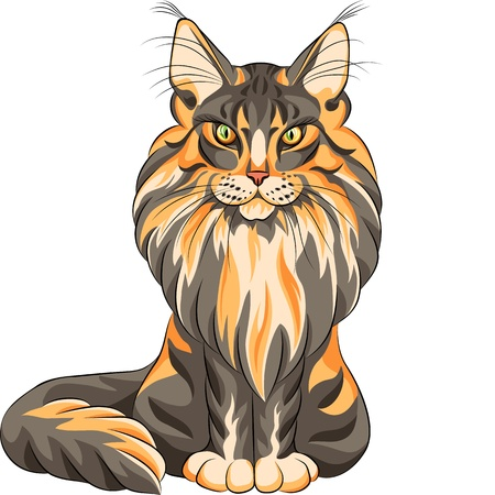 longhaired: color sketch serios black and red fluffy Maine Coon (American Longhair) cat sitting Illustration