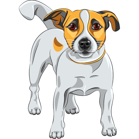 terriers: color sketch of the cartoon dog Jack Russell Terrier breed