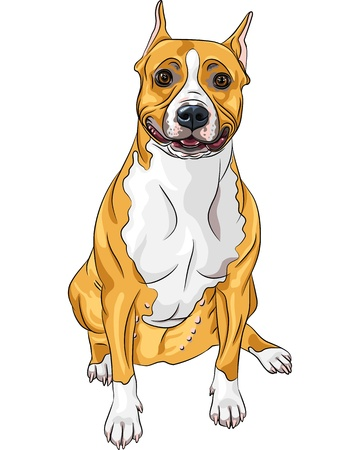 sketch of the smiling dog American Staffordshire Terrier breed sitting Stock Vector - 16878921