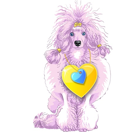 vector color sketch of the dog brown and white Poodle breed sitting, isolated on the white background Stock Vector - 17531623