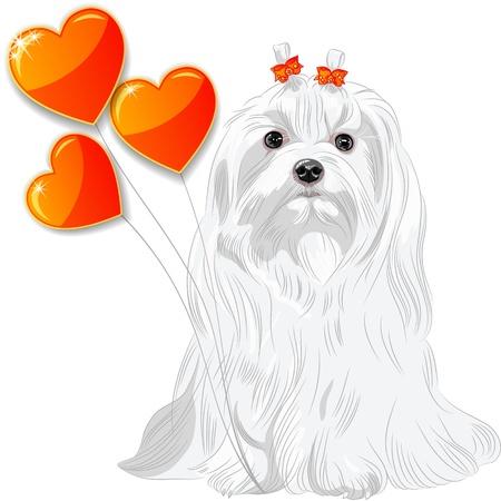Tarjeta de San Valentín con un divertido perro de raza corazones malteses y rojos