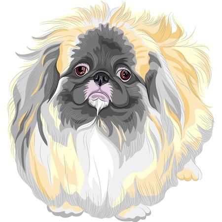 カラー スケッチ悲しいセーブル ペキニーズ犬のライオン犬ペキニーズのライオン犬、Pelchie 犬、またはペケ 写真素材 - 17675833