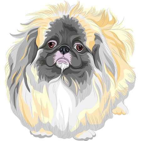 color sketch sad Sable Pekingese dog  Lion-Dog, Pekingese Lion-Dog, Pelchie Dog, or Peke   Stock Vector - 17675833