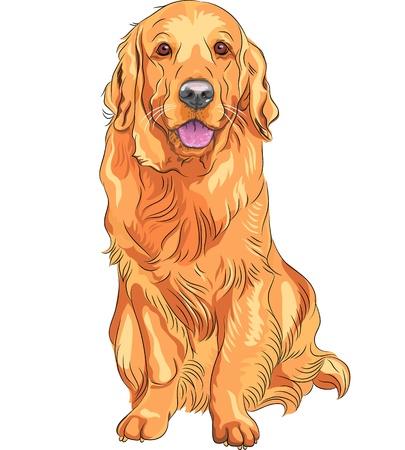 赤い笑顔のクローズ アップの肖像画銃犬の品種ゴールデンレトリバーが座っています。