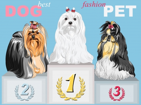 fashion Dog champion long-haired breeds with beautiful hairstyles on the podium Vector